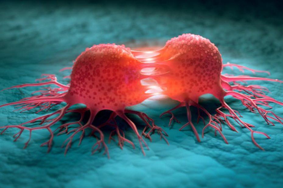 أثر المواد الكيميائية المسرطنة في انقسام الخلايا وتكاثرها